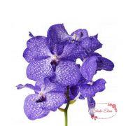 Цветок орхидея Ванда, шт