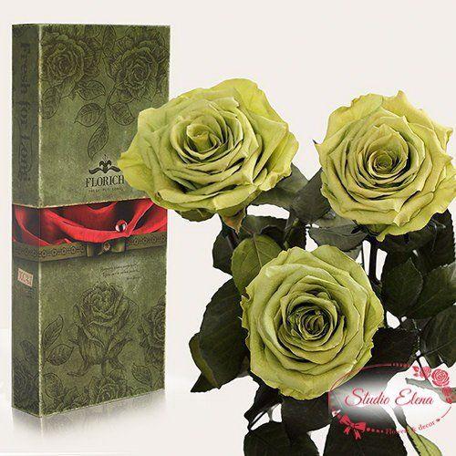 Довгосвіжа троянда - Золотистий лайм