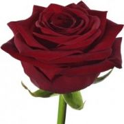 Букет роз Бордо
