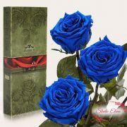 Довгосвіжа троянда - Синій сапфір