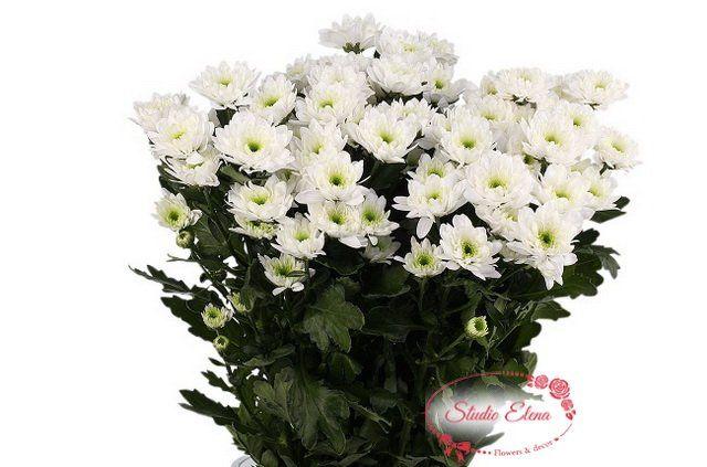 Цветы для букета — Хризантема кустовая