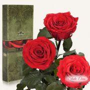 Довгосвіжа троянда - Червоний рубін