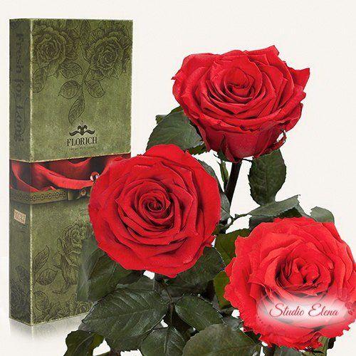Долгосвежая роза — Красный рубин