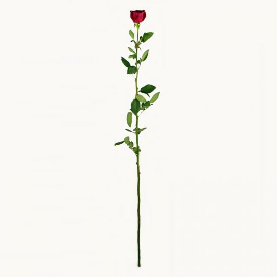 Гигантская роза, 150 см