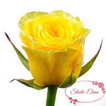 Троянда жовта українська
