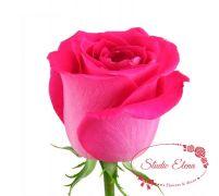 Роза Топаз, 1 м