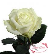 Троянда Аваланч 50 см